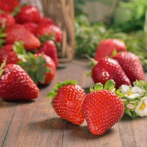 Agricultura ecológica | Bionest