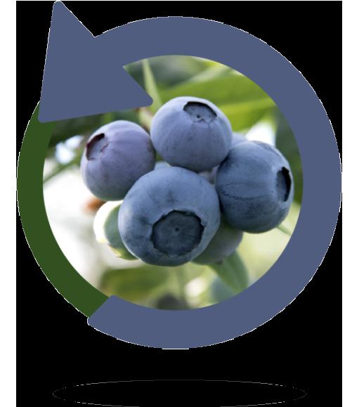 arandano-ecologica-bionest-2