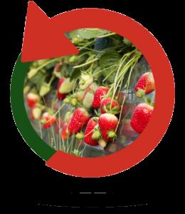 Fresa ecológica | Bionest