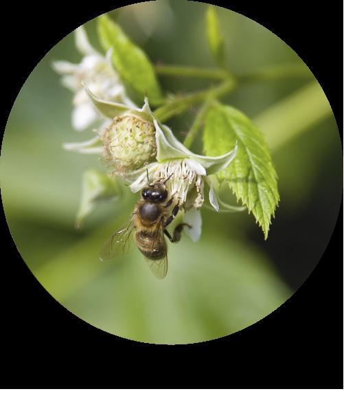 mora-ecologica-bionest-2