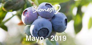 informe-mensual-arandanos-bionest-cabecera