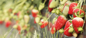 informe-mensual-bionest-fresa