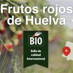 Los frutos rojos de Huelva, sello de calidad internacional