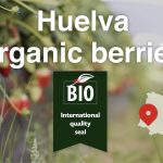 Huelva organic berries, international quality seal