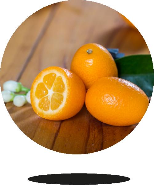 kumquat-bio-03-bionest