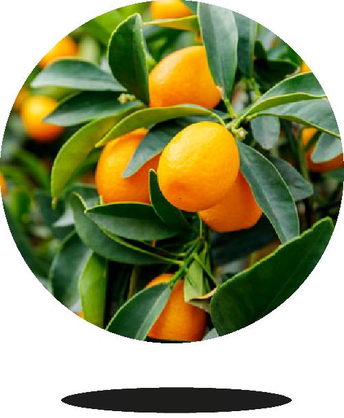 kumquat-bio-04-bionest