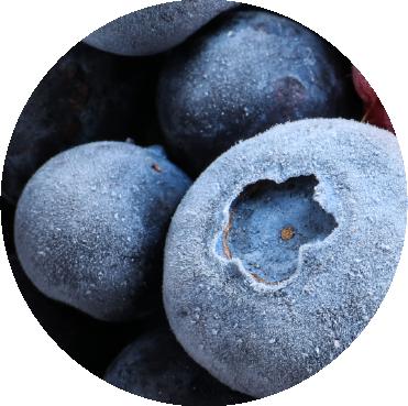 bionest- IQF - Congelado de fruta